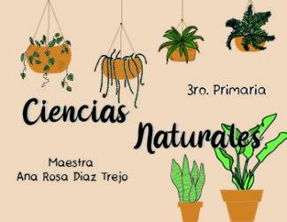 Primaria 3° año – Ciencias Naturales
